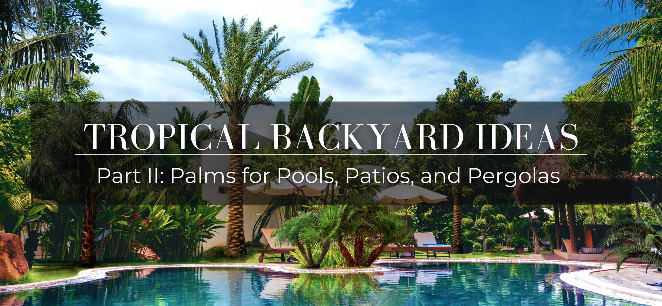 Tropical backyard ideas: palms for pools, patios, and pergolas