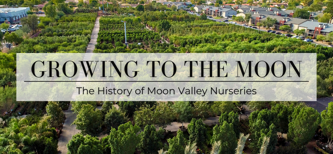 Growing to the Moon: The History of Moon Valley Nurseries