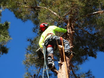 tree trimming services from Moon Valley Nurseries