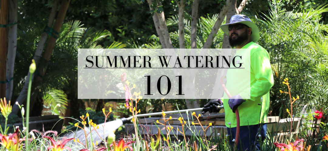 summer watering guide