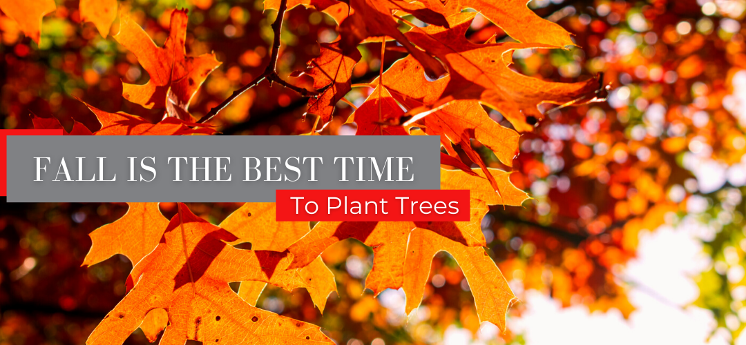Fall is the best time to plant trees header
