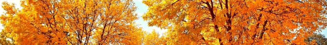 Fall header 3