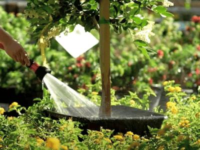 Watering plants at nursery