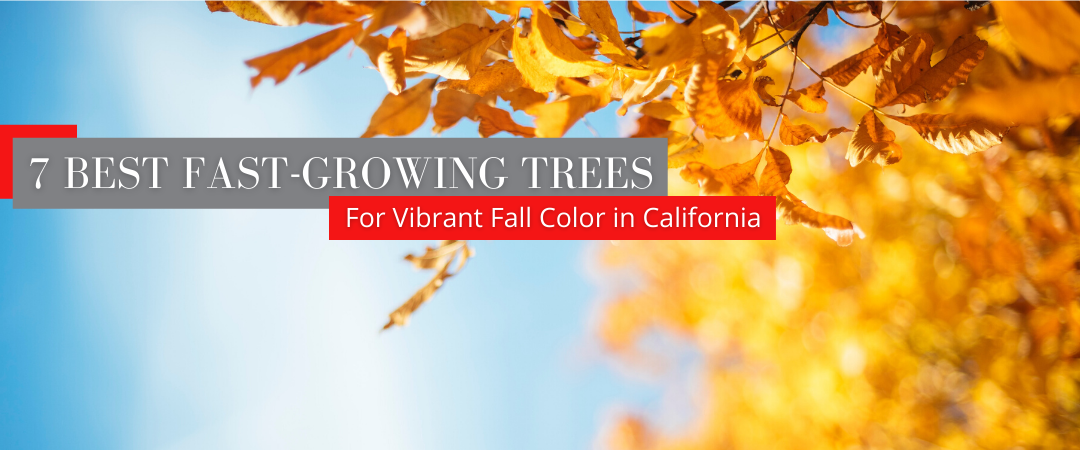 7 best fast growing trees for fall color header CA