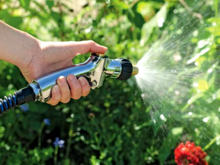 water your trees and plants appropriately for spring