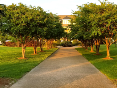 Row of trees along driveway