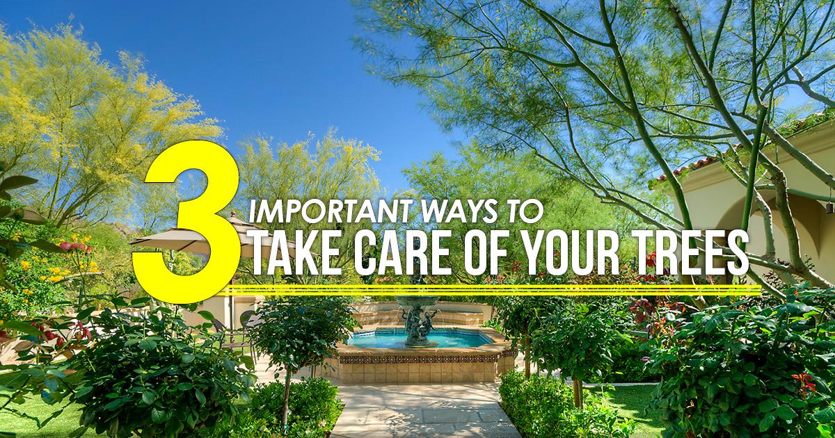 3 ways to take care of trees AZ