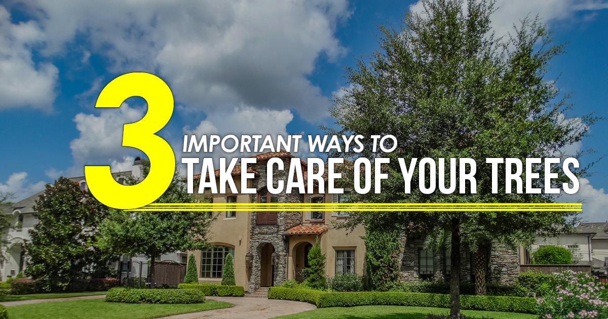 3 ways to take care of trees TX