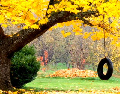 Tire Swing on Mature Oak Tree with Fall Color