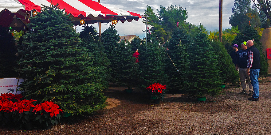 6 Tips On How To Care For Your Fresh Cut Christmas Tree