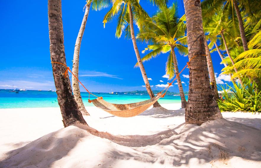 palms_calming_nature