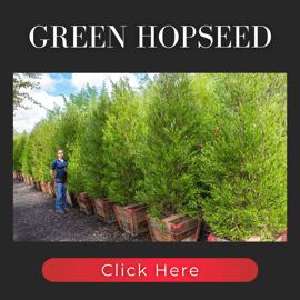 Green Hopseed hedges