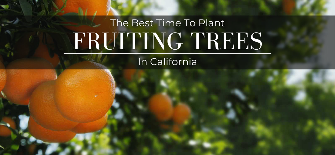 The Best time to plant fruiting trees in California