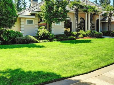 beautiful Lawn in yard