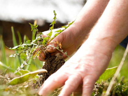 How to keep away weeds in spring