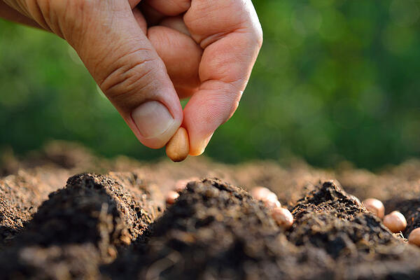 planting tips for may moon valley nurseries