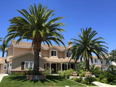 Pinapple Palms and Beautiful Landscape