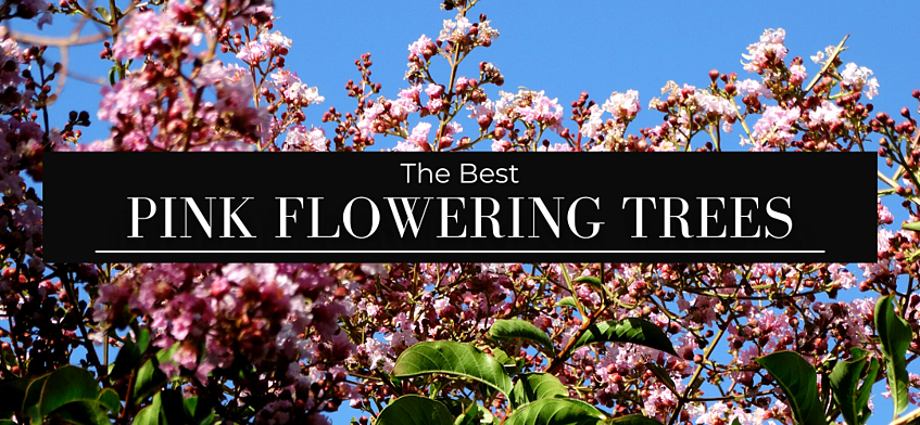 The Best Pink Flowering Trees