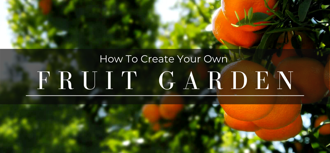 How to create your own fruit garden