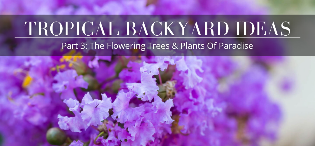 tropical backyard ideas - part 3: The flowering trees & Plants of paradise