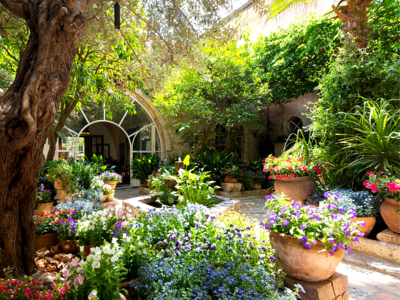 potted plants for curb appeal