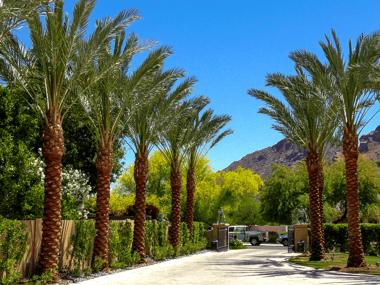 Moon Valley Nurseries date palms along driveway