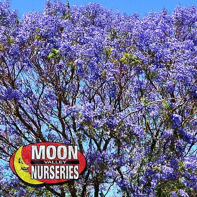 FloweringTrees4