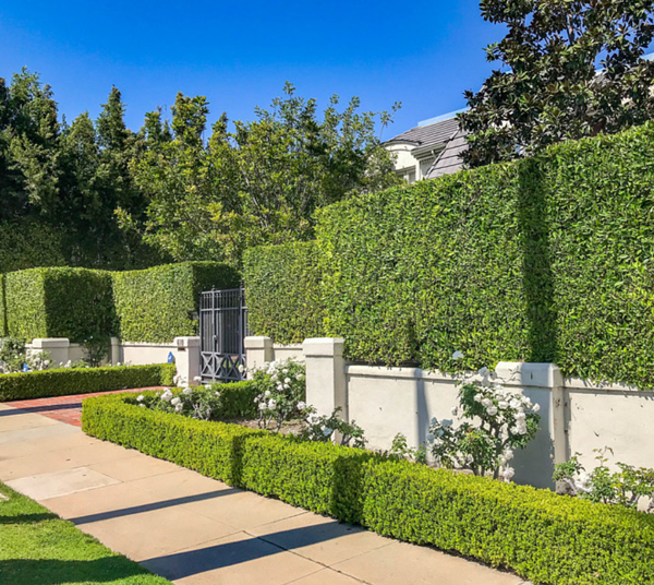 Hollywood Hedge