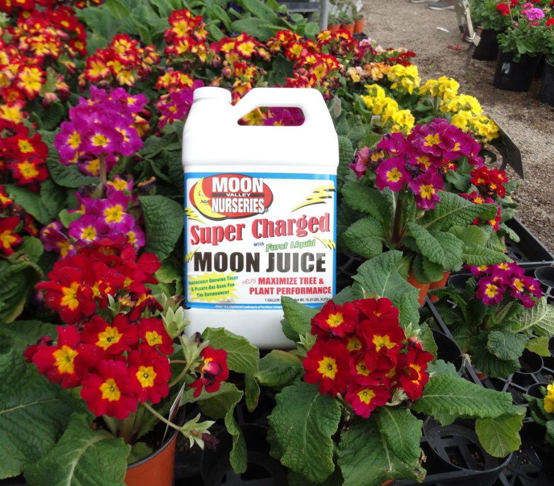 Super Moon Juice