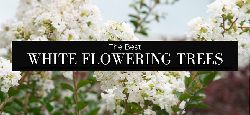 BEST RED FLOWERING TREES (1)