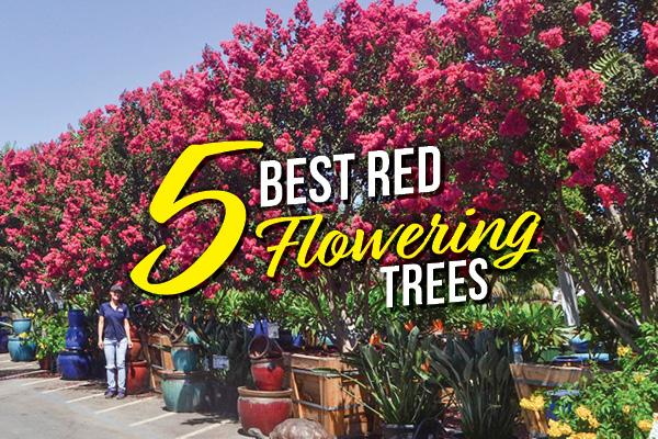 BLOG Best Flowering Trees