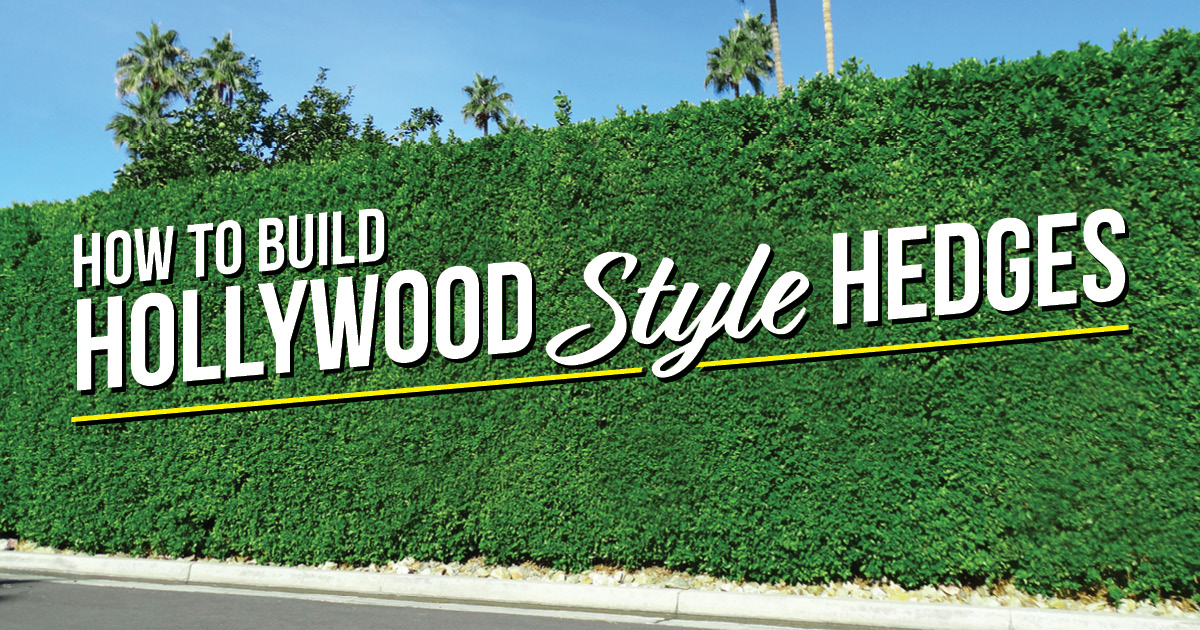 How to Build a Hollywood-style hedge