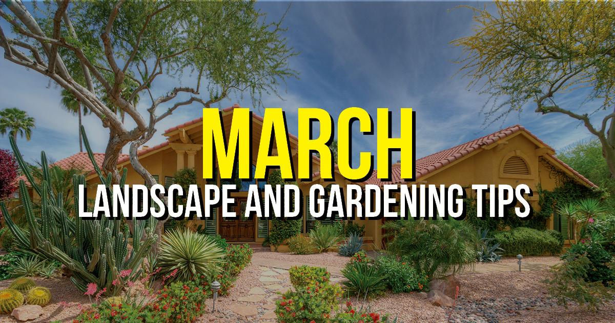 BLOG march Landscape Tips AZ