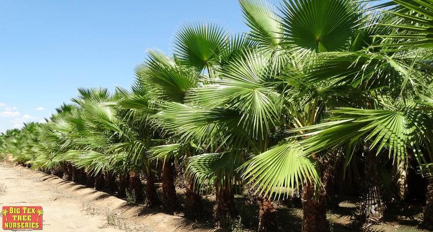 blog_main_palm_planting.jpg