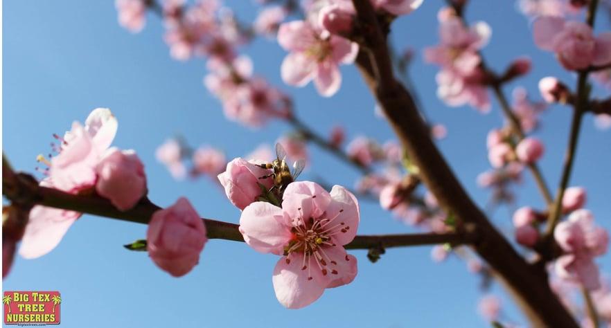 blog_main_pic_flowering_trees_neighborhood.jpg