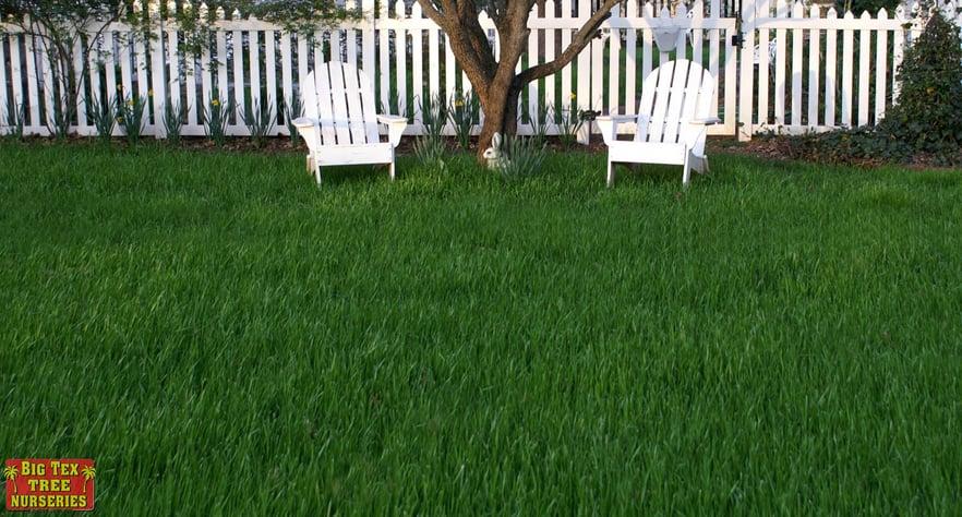 blog_main_pic_spring_lawn.jpg
