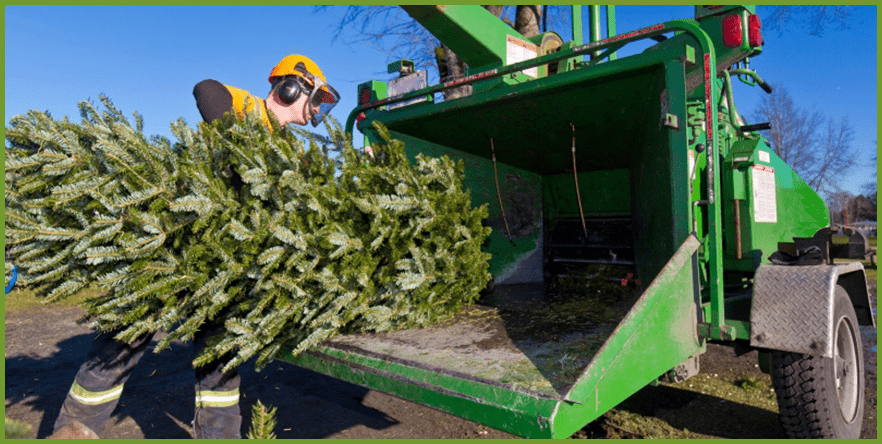 environment-friendly-wayts-to-recycle-christmas-trees-1_orig