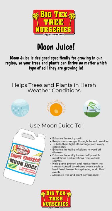 moon juice infographic