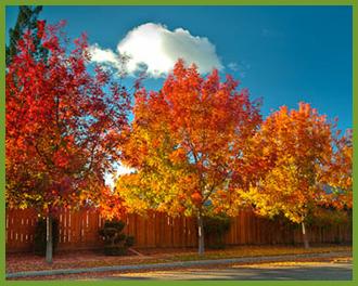 <img src=&quot;image file&quot; alt=&quot;fall color&quot;>