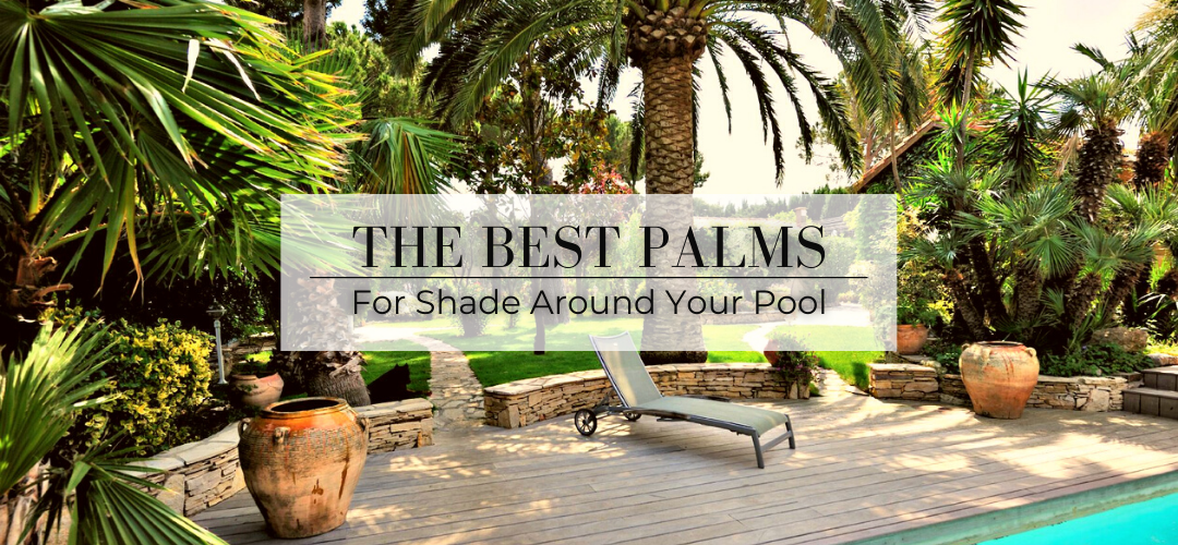 The Best Palms for poolside shade
