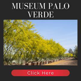 Museum Palo Verde