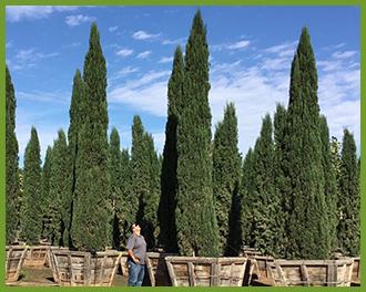 Cypress-3.png