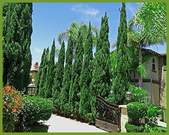 Cypress-4.png