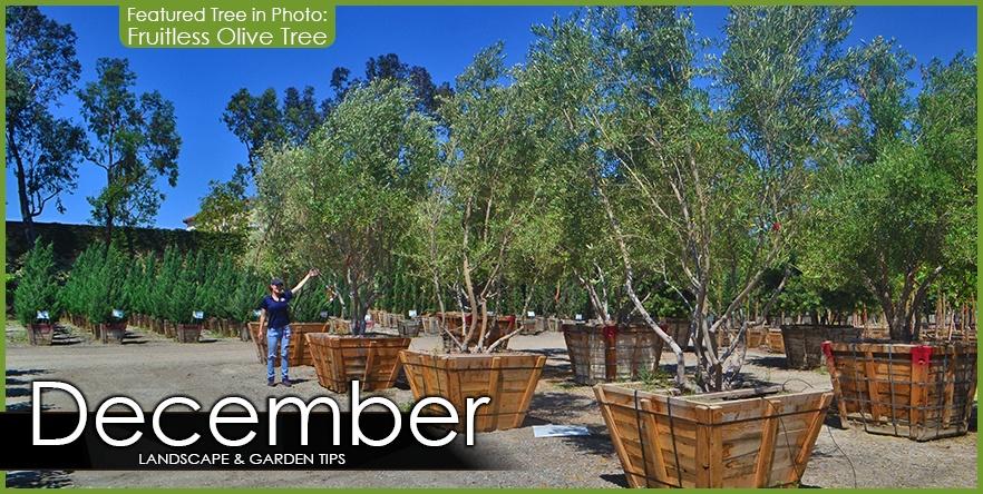 December Landscape Garden Tip.jpg