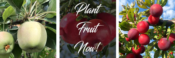 fruit trees tx