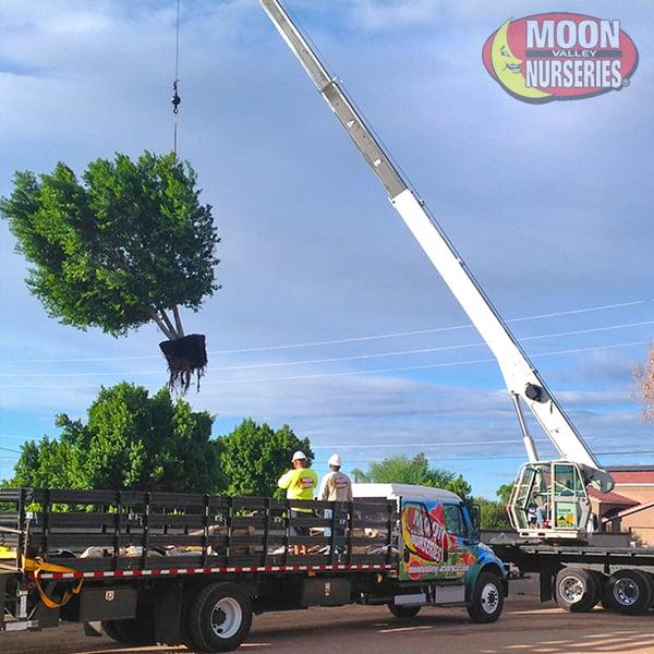 tree planting crane