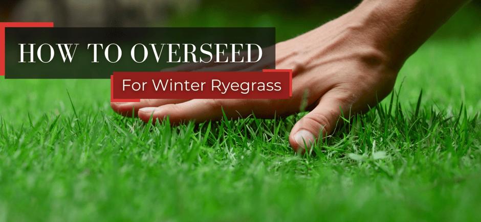 For Winter Ryegrass