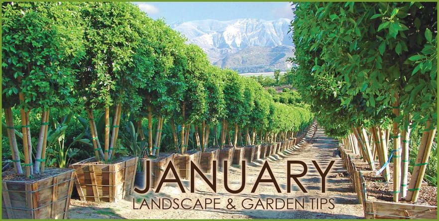 January Landscape Garden Tips