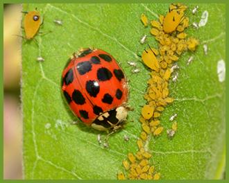 Ladybug.png
