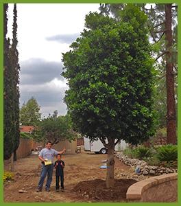 Massive-Ficus.png